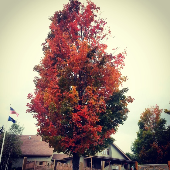 FALL ALERT. This is a tree we saw in Vermont last weekend while visiting a good friend, Mike!